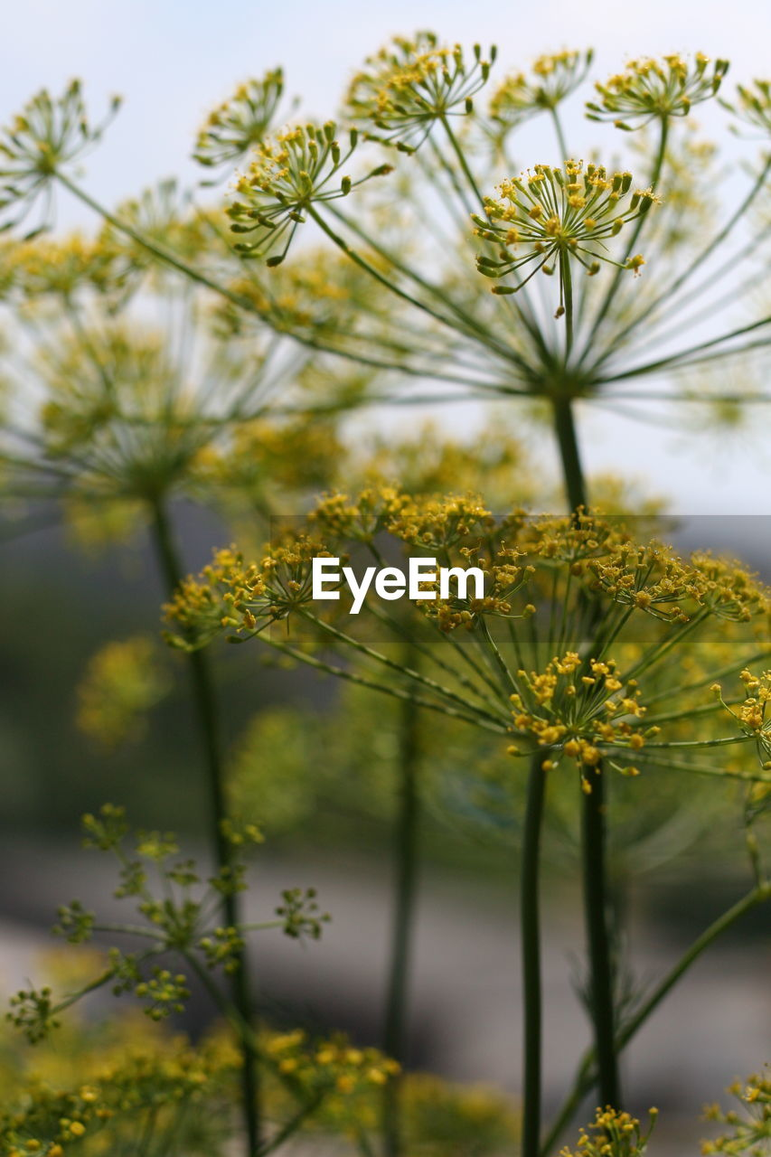 plant, flower, flowering plant, growth, yellow, beauty in nature, vulnerability, freshness, fragility, selective focus, close-up, nature, no people, day, tree, petal, outdoors, plant stem, focus on foreground, flower head, springtime, pollen