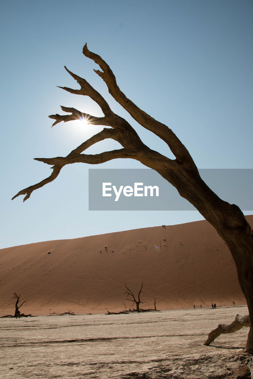 sand, desert, sand dune, arid climate, nature, clear sky, tranquil scene, landscape, outdoors, tranquility, day, scenics, lone, beauty in nature, no people, branch, bare tree, blue, tree, sky, dead tree