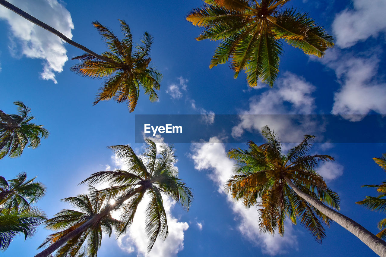 sky, tropical climate, palm tree, plant, tree, low angle view, growth, cloud - sky, beauty in nature, no people, nature, tall - high, coconut palm tree, day, tranquility, scenics - nature, tree trunk, trunk, outdoors, tropical tree, palm leaf