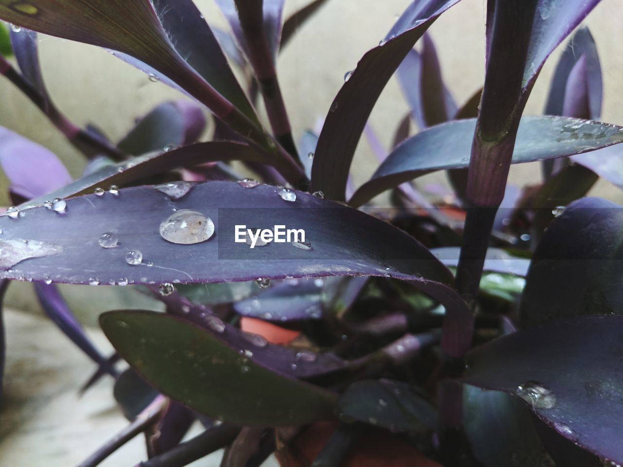 drop, water, wet, growth, plant, plant part, leaf, close-up, beauty in nature, nature, no people, day, freshness, selective focus, outdoors, rain, purity, vulnerability, raindrop, dew, leaves, blade of grass