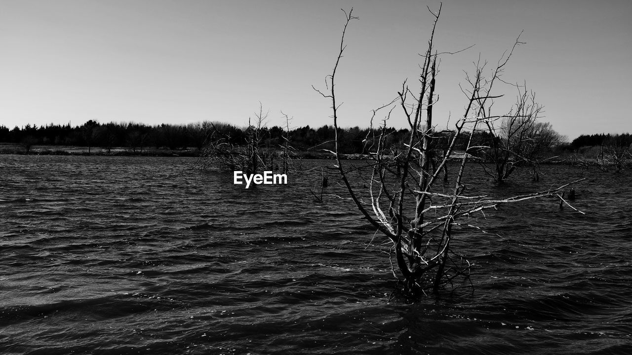 Bare trees in lake against clear sky