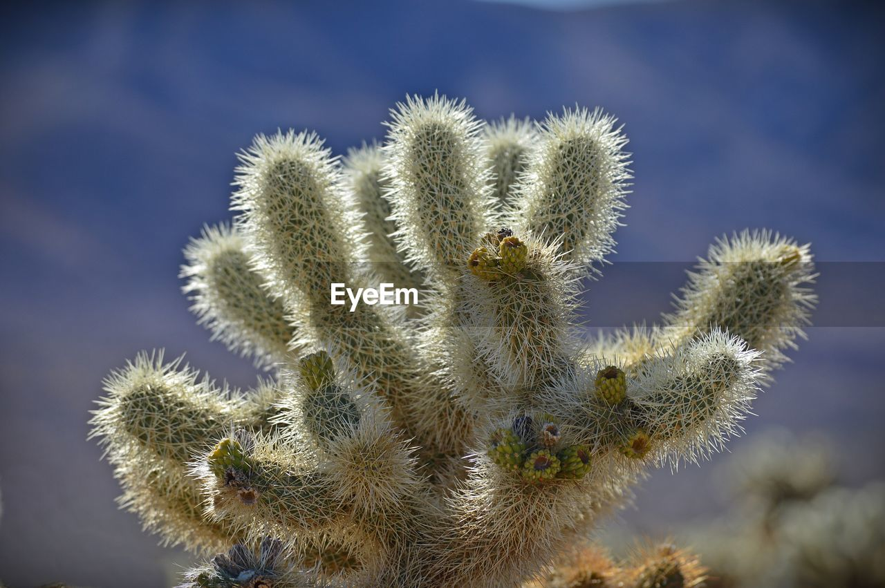 cactus, nature, plant, thorn, spiked, growth, beauty in nature, day, no people, outdoors, focus on foreground, green color, close-up, prickly pear cactus, sky