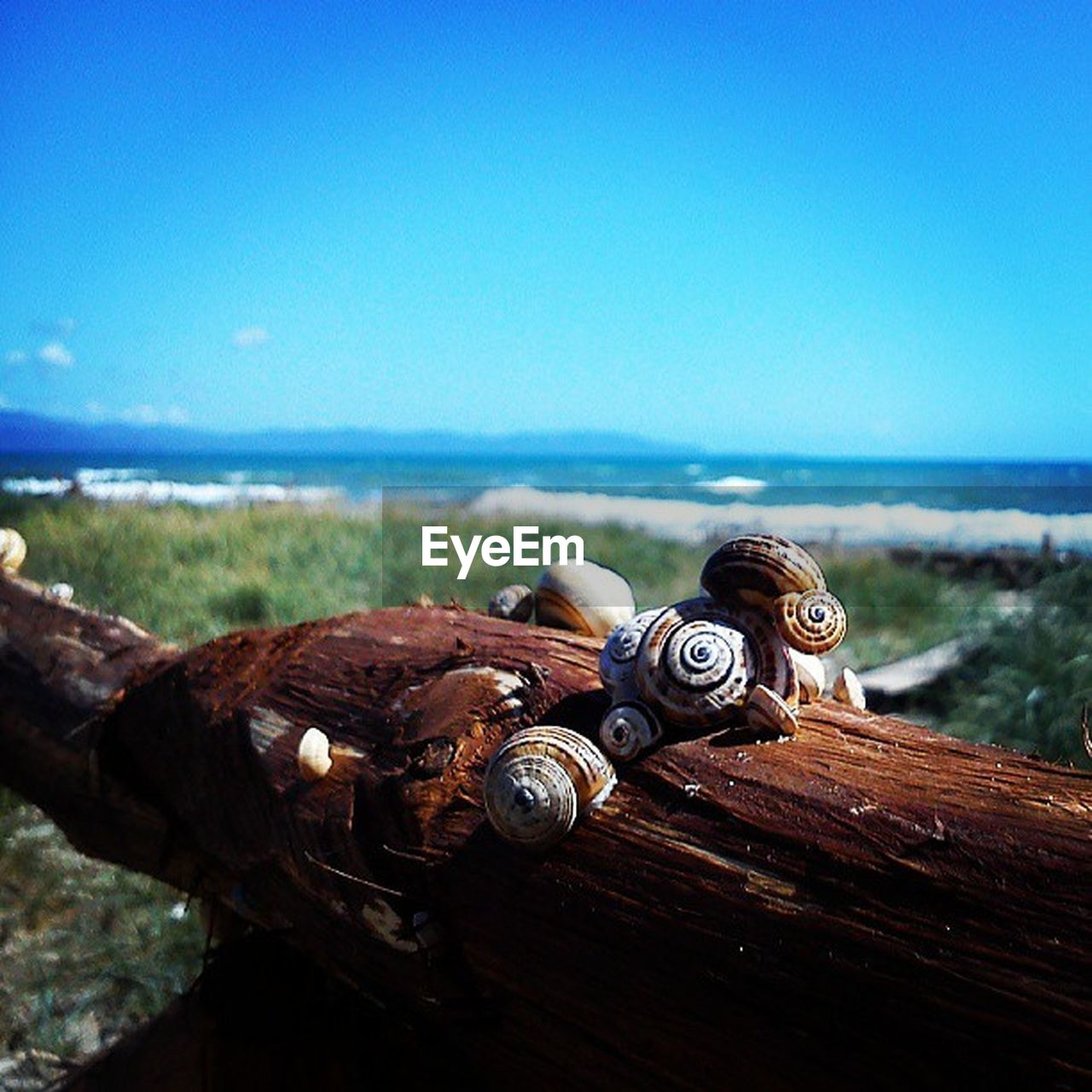 sea, water, no people, rusty, horizon over water, metal, beach, close-up, outdoors, day, nature, blue, sky, clear sky, animal themes