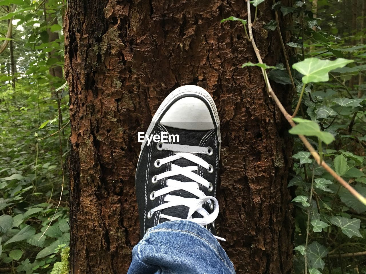 low section, real people, one person, human leg, shoe, growth, day, standing, tree trunk, human body part, men, tree, lifestyles, nature, outdoors, plant, leaf, close-up, people