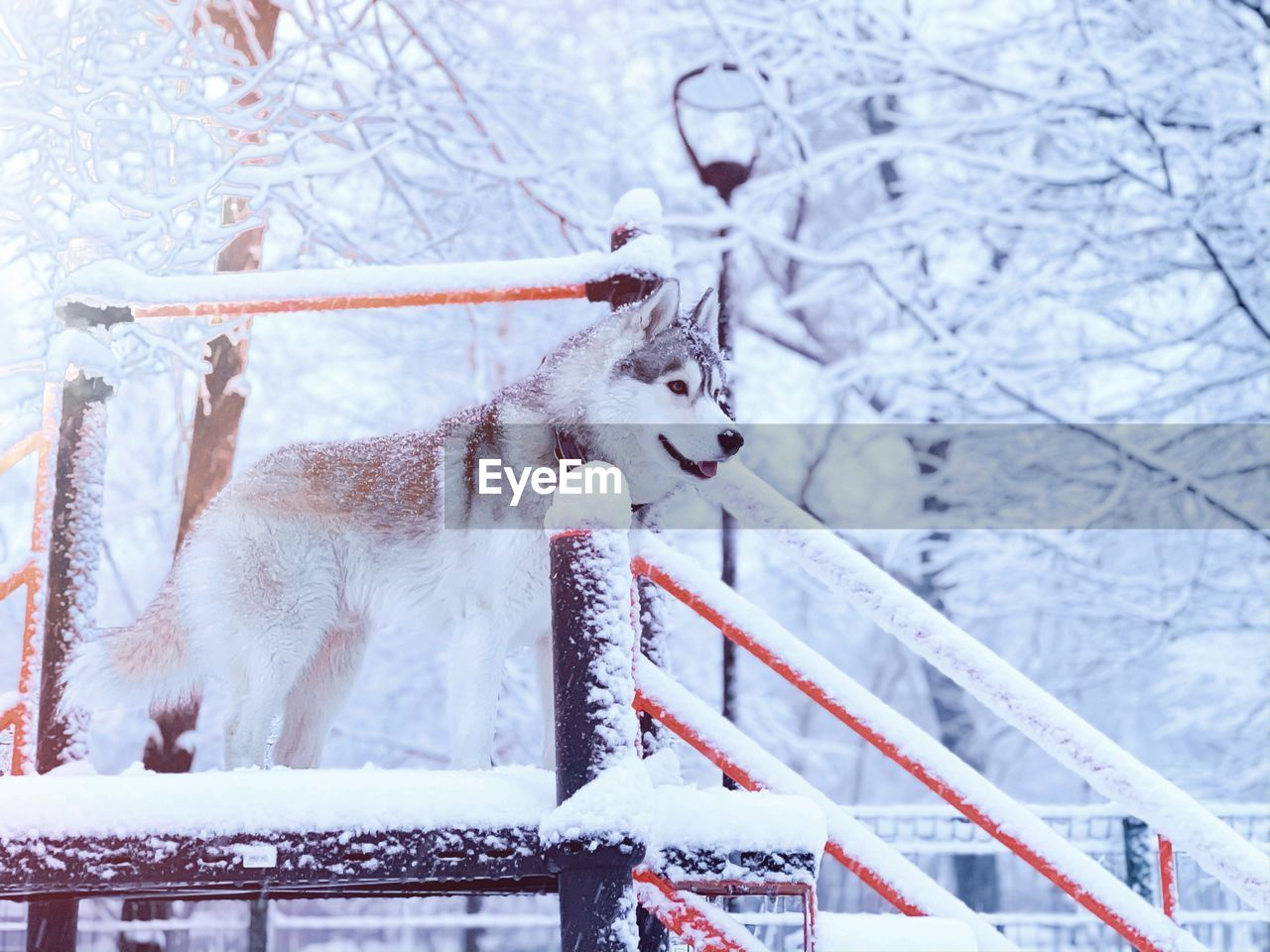 winter, snow, cold temperature, tree, animal themes, mammal, animal, one animal, nature, branch, vertebrate, plant, day, animal wildlife, animals in the wild, no people, beauty in nature, white color, frozen, snowing