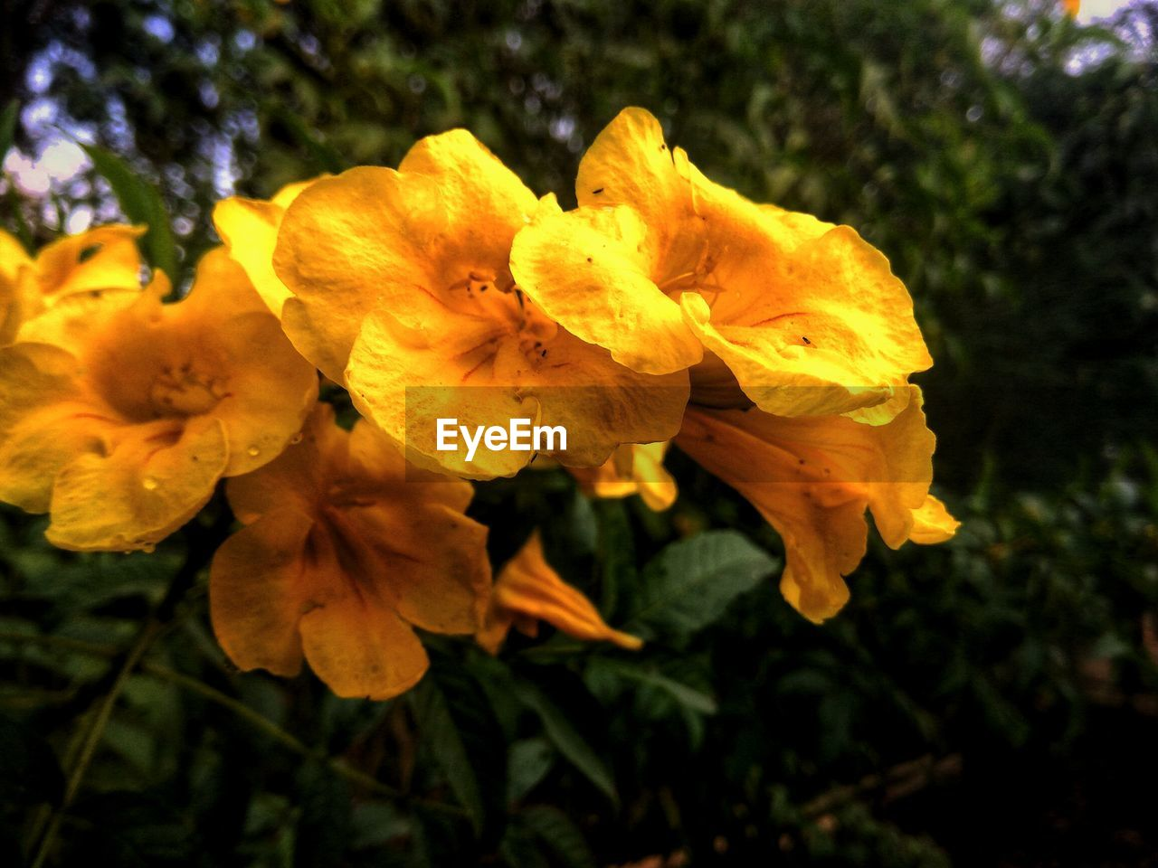 CLOSE-UP VIEW OF YELLOW FLOWER