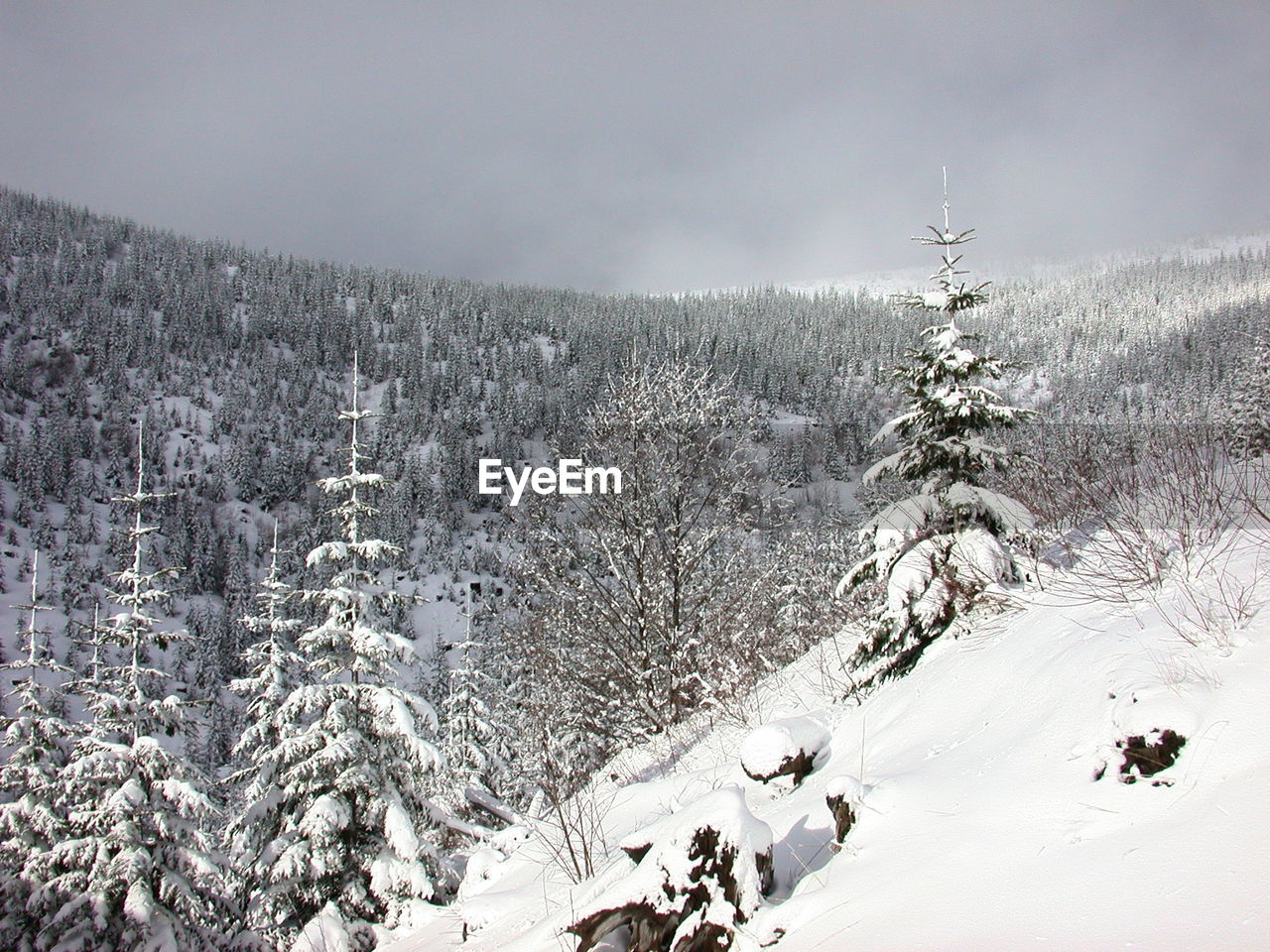 cold temperature, winter, snow, tree, covering, sky, beauty in nature, tranquility, plant, tranquil scene, nature, scenics - nature, non-urban scene, environment, land, day, mountain, white color, frozen, no people, outdoors, extreme weather, snowcapped mountain