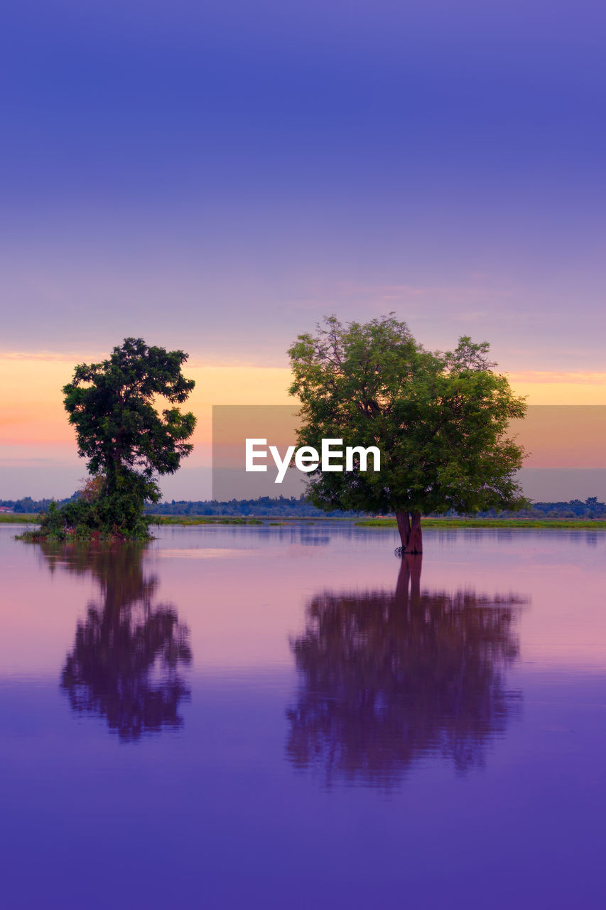 sunset, sky, reflection, water, beauty in nature, tranquility, scenics - nature, tree, waterfront, plant, tranquil scene, lake, nature, no people, orange color, idyllic, non-urban scene, outdoors, growth, purple