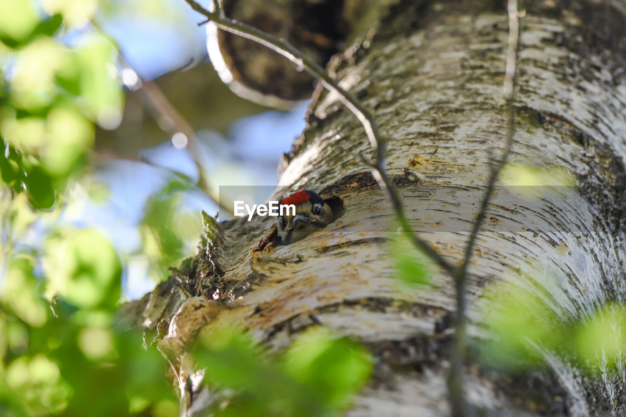 animal, animal themes, selective focus, animal wildlife, animals in the wild, one animal, tree, no people, nature, close-up, day, vertebrate, outdoors, plant, insect, tree trunk, wood - material, plant bark, invertebrate, bird