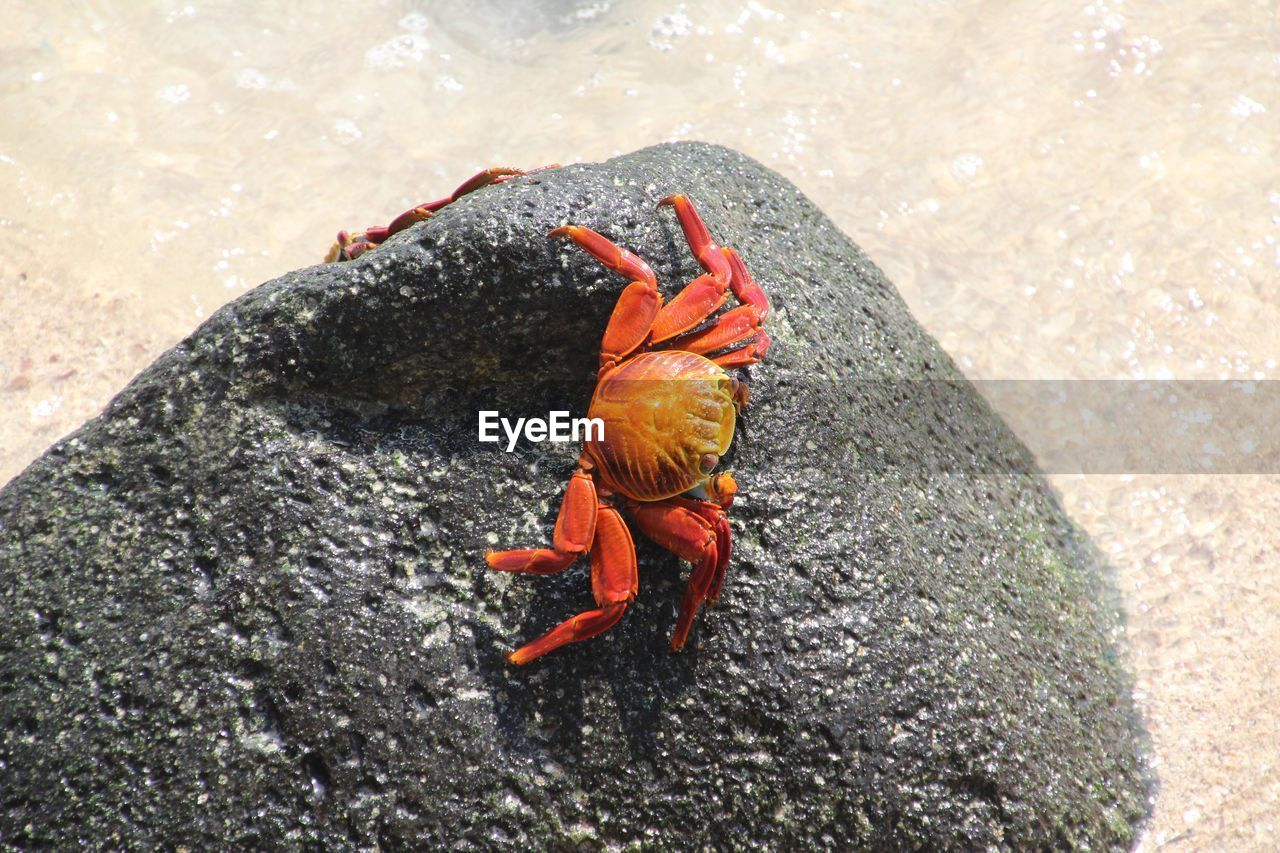 Crabs On Stone At Beach