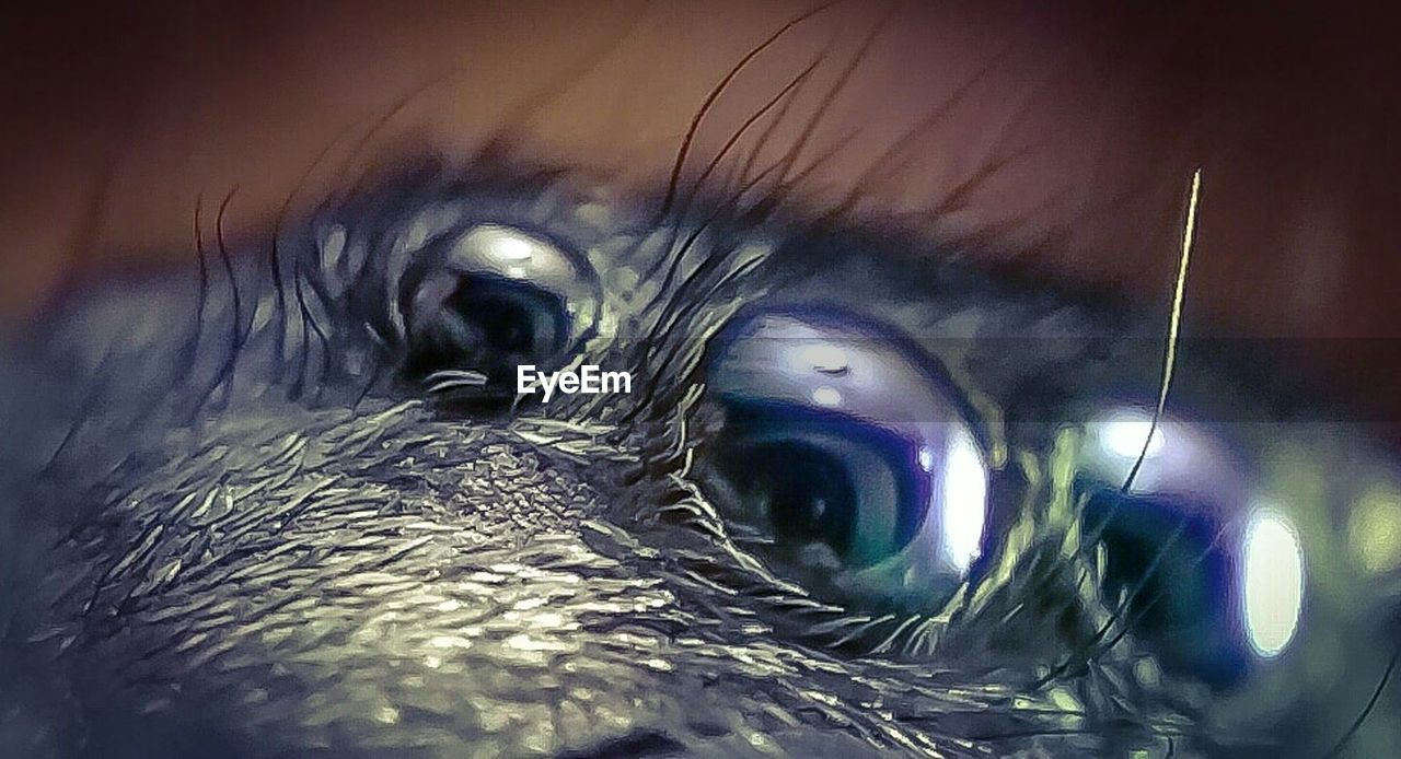 close-up, eyesight, human eye, eyeball, indoors, human body part, iris - eye, animal themes, eyelash, one person, day, people