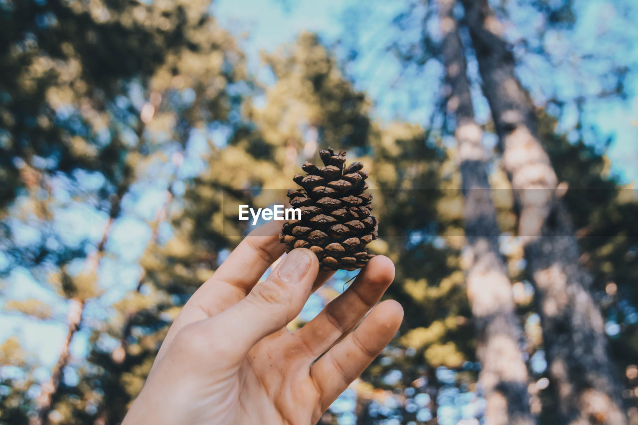 Cropped Hand Of Person Holding Pine Cone Against Trees