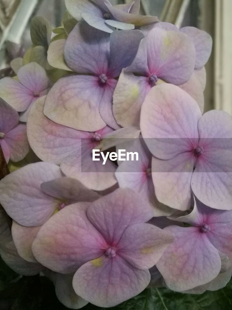 flower, petal, flower head, beauty in nature, plant, nature, growth, close-up, fragility, no people, pink color, outdoors, blooming, freshness, day, periwinkle