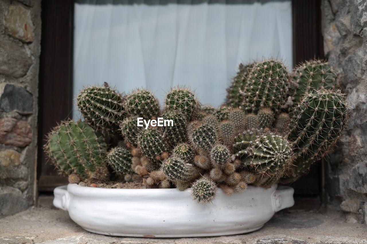 Close-Up Of Cactus Growing