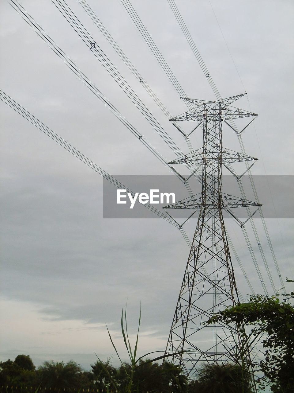 electricity pylon, cable, technology, electricity, fuel and power generation, power line, connection, power supply, sky, low angle view, nature, cloud - sky, no people, plant, tall - high, day, tree, outdoors, growth, metal, electrical component, electrical equipment