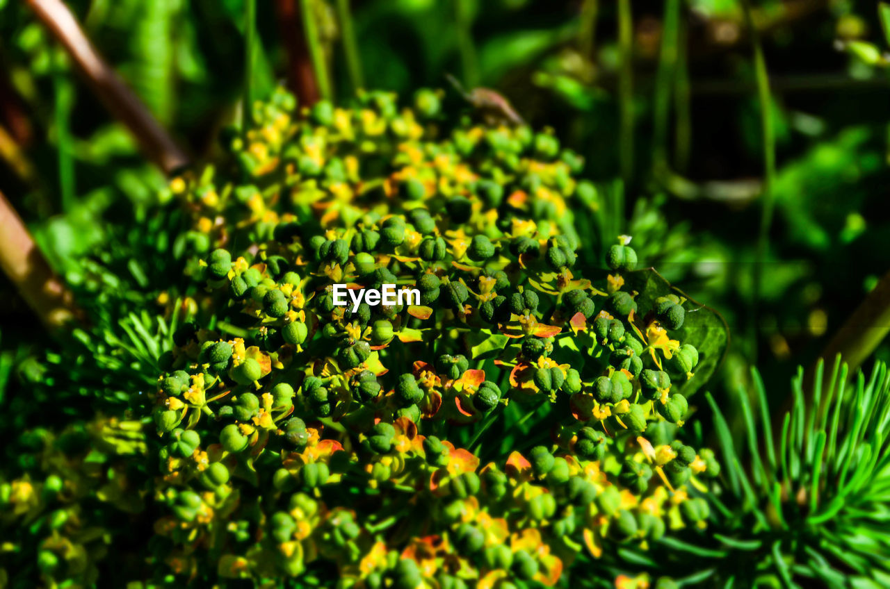 green color, nature, growth, no people, beauty in nature, outdoors, day, close-up, freshness