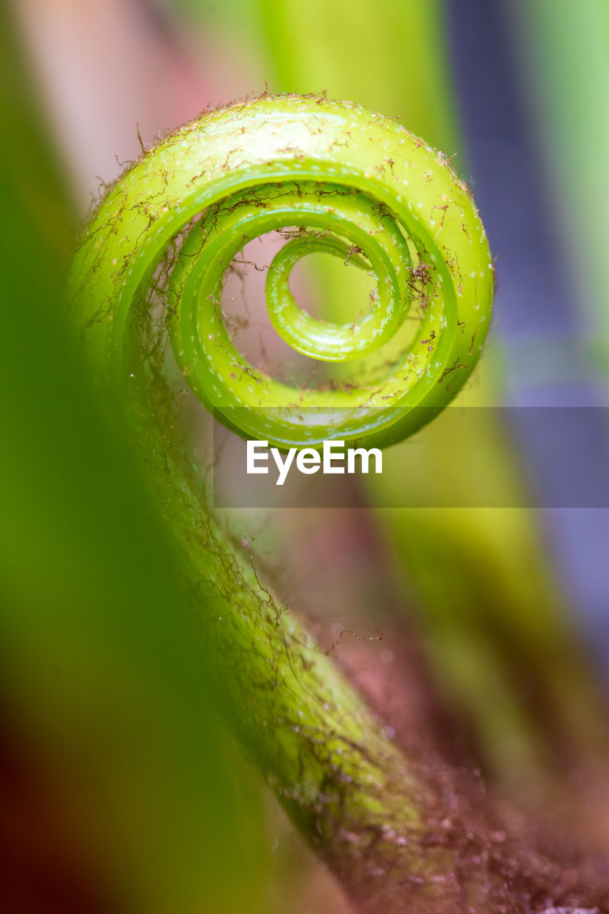 green color, close-up, selective focus, no people, plant, beauty in nature, spiral, growth, nature, tendril, freshness, day, fragility, vulnerability, drop, focus on foreground, wet, water, macro, extreme close-up, curled up, dew