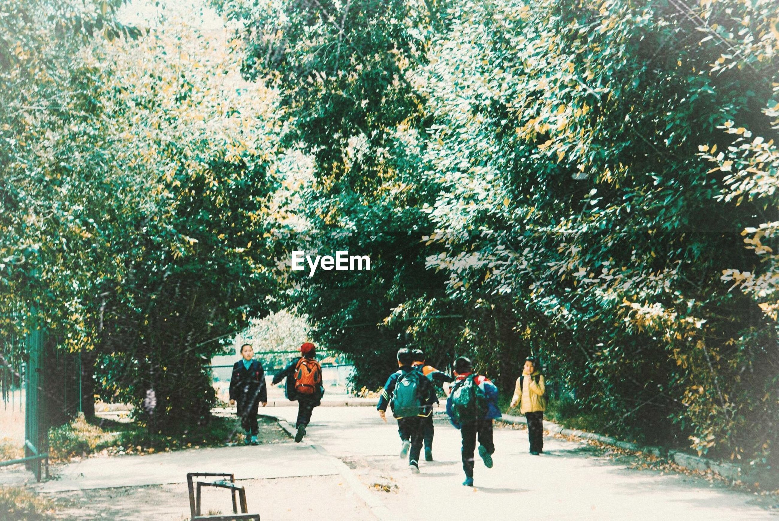 tree, walking, full length, rear view, road, group of people, person, men, park - man made space, togetherness, footpath, day, friendship, nature, pathway, tranquility, tranquil scene, treelined, green color, outdoors, solitude, beauty in nature, non-urban scene, the way forward