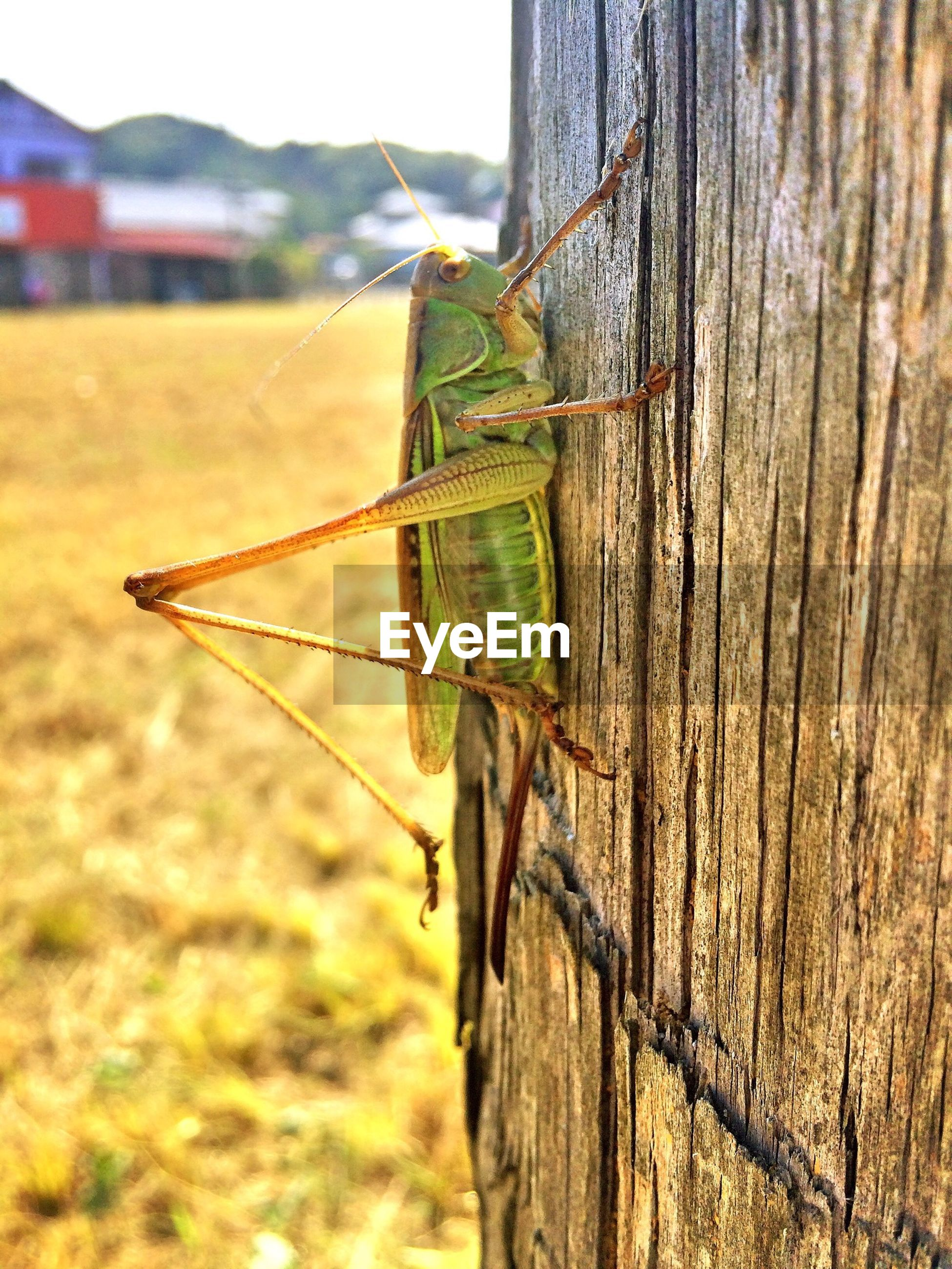 focus on foreground, one animal, animal themes, animals in the wild, insect, wildlife, field, fence, wood - material, nature, close-up, day, landscape, selective focus, outdoors, barbed wire, no people, grass, protection, tree