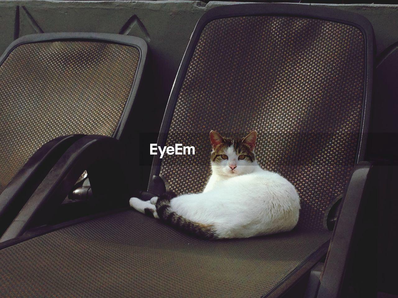 Cat lying on chair