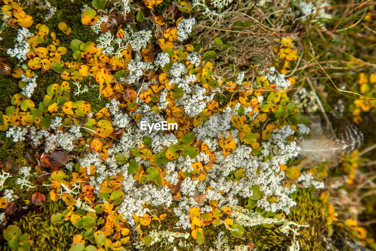 plant, beauty in nature, growth, yellow, flowering plant, nature, fragility, flower, vulnerability, freshness, no people, day, close-up, outdoors, focus on foreground, lichen, tree, fungus, tranquility, land, flower head