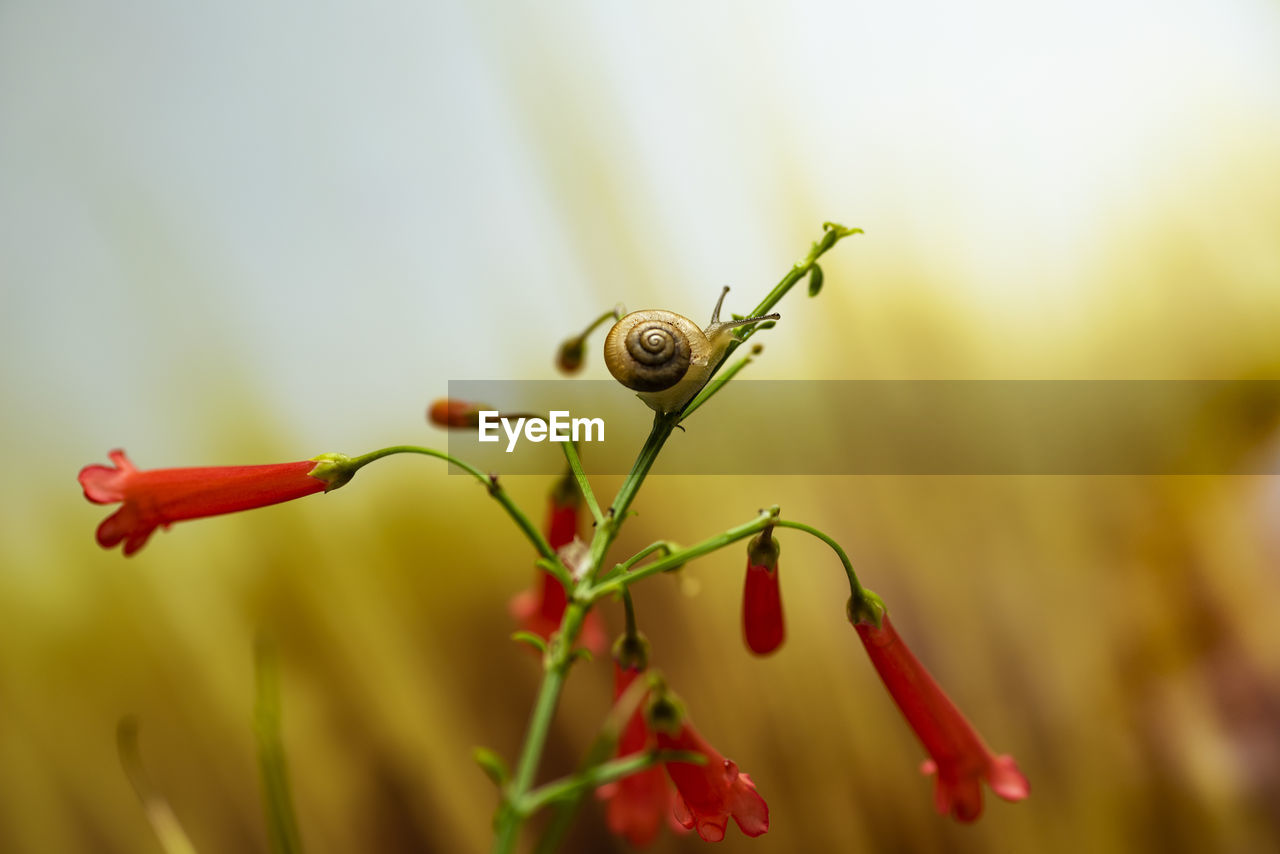 plant, close-up, red, invertebrate, growth, no people, selective focus, focus on foreground, beauty in nature, animal wildlife, animal, one animal, animals in the wild, nature, day, green color, animal themes, fragility, freshness, insect, outdoors, sepal