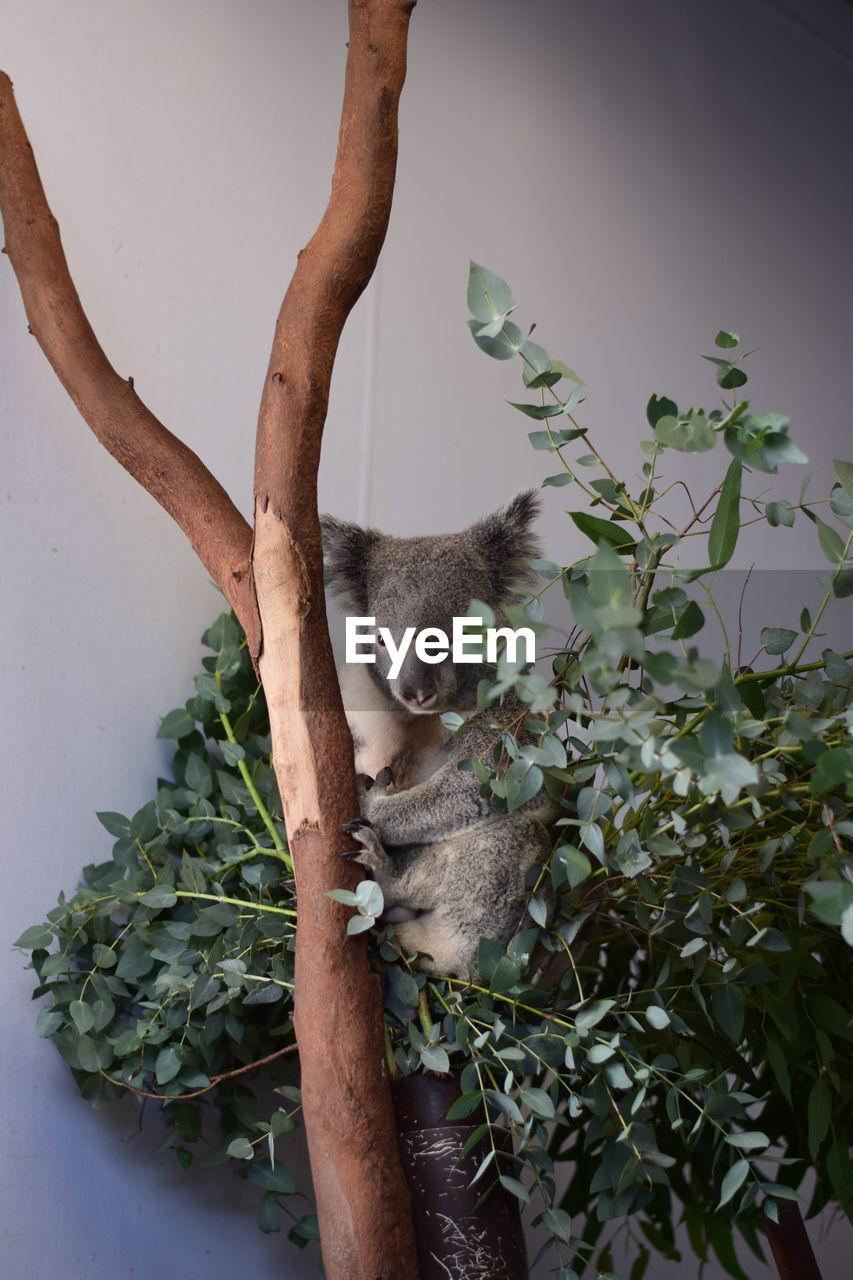 Close-up of koala sitting on plant
