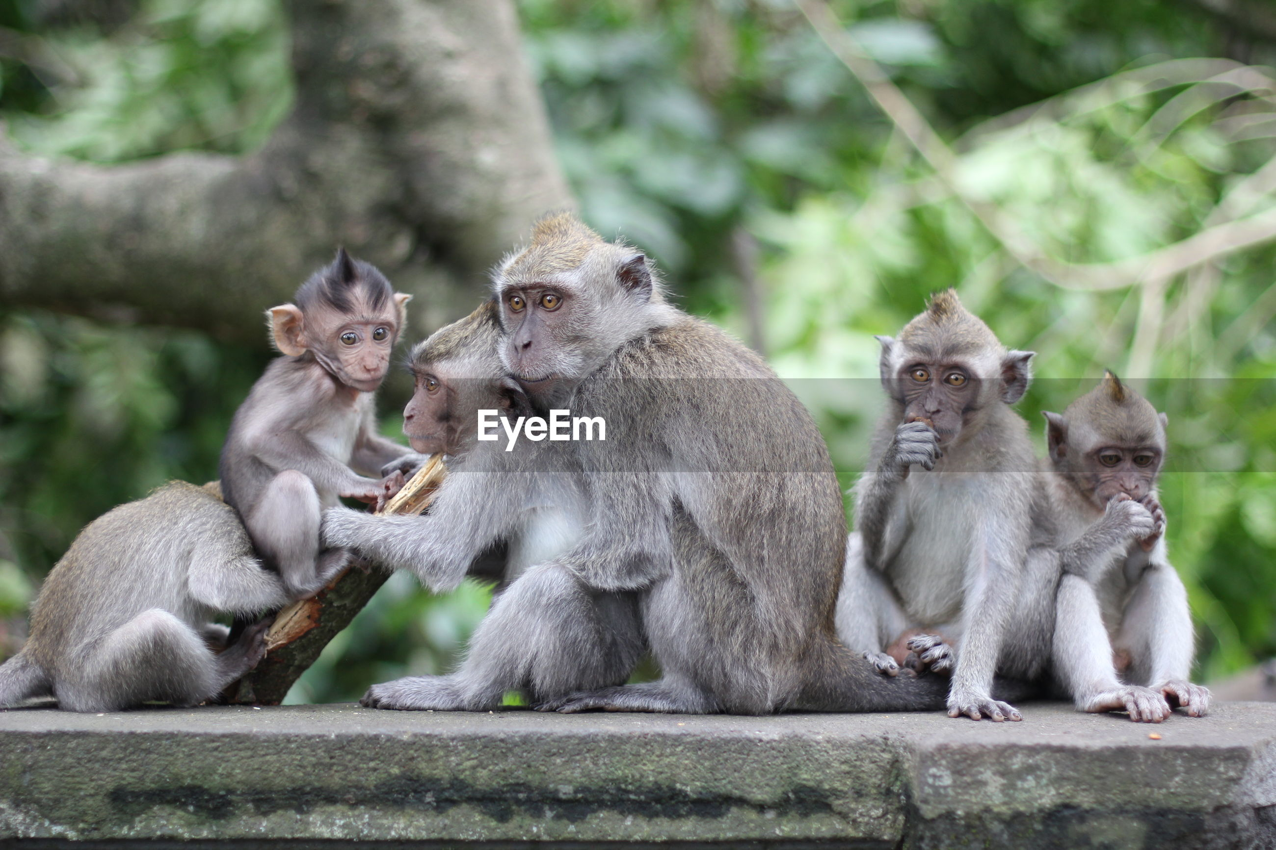 View of monkeys sitting on wall