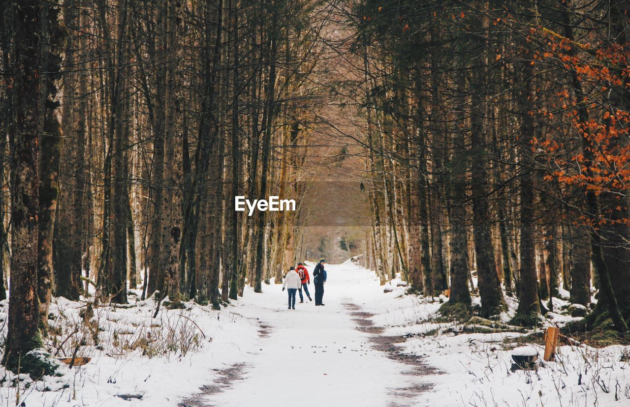 People Walking On Snow Covered Land Amidst Bare Trees