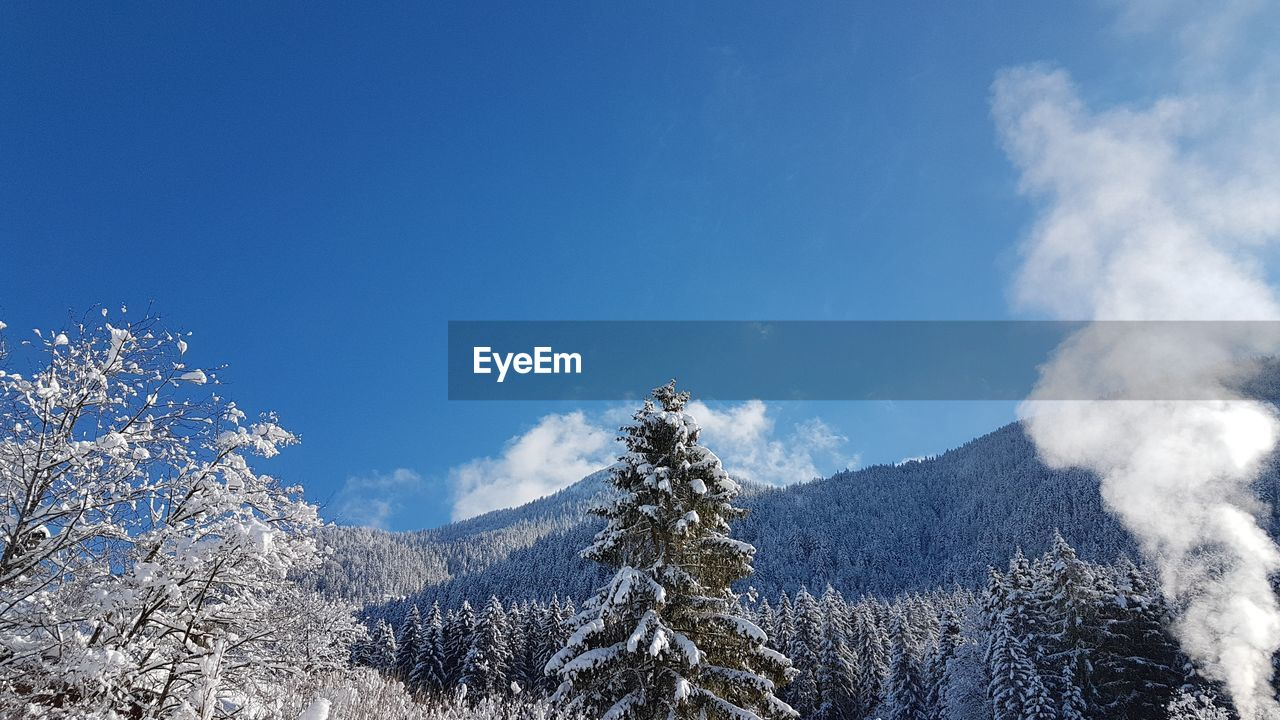 sky, beauty in nature, tree, tranquil scene, cloud - sky, tranquility, plant, scenics - nature, winter, snow, nature, blue, cold temperature, mountain, day, non-urban scene, no people, environment, low angle view, outdoors, snowcapped mountain