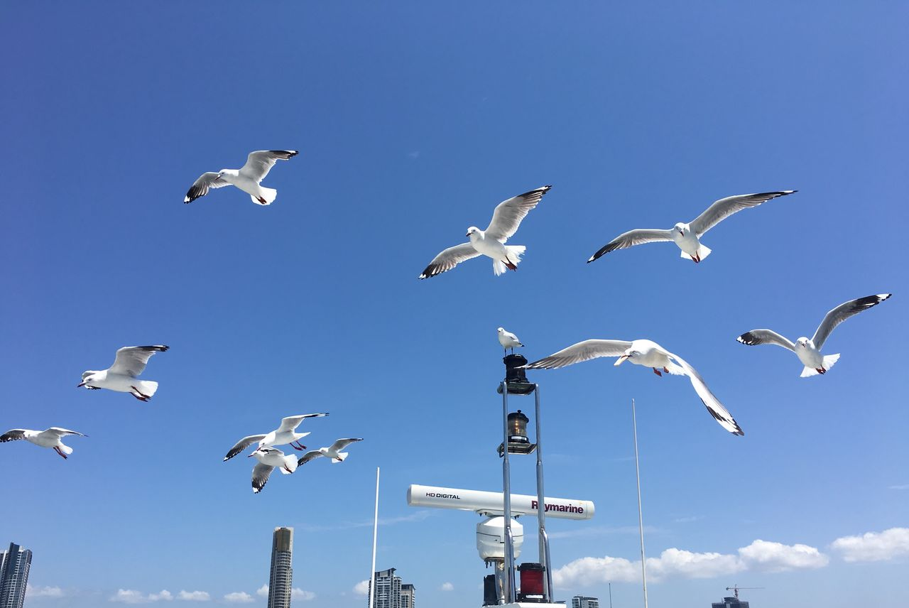 bird, animals in the wild, animal wildlife, vertebrate, animal, animal themes, group of animals, sky, flying, spread wings, seagull, no people, nature, large group of animals, day, mid-air, low angle view, flock of birds, blue