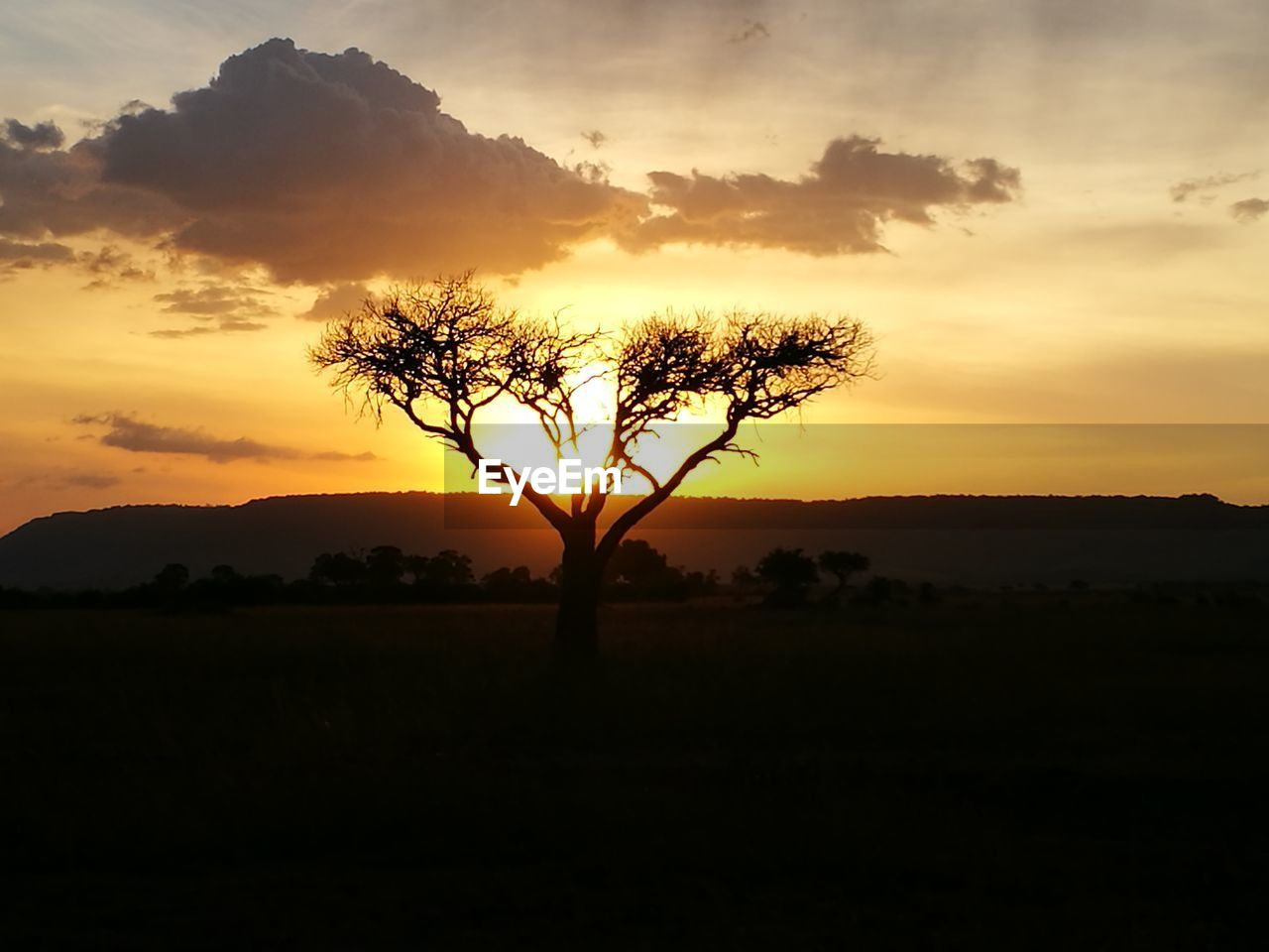 tree, sunset, nature, silhouette, beauty in nature, scenics, tranquility, tranquil scene, orange color, landscape, sky, solitude, outdoors, no people, tree trunk, lone, growth, branch, day