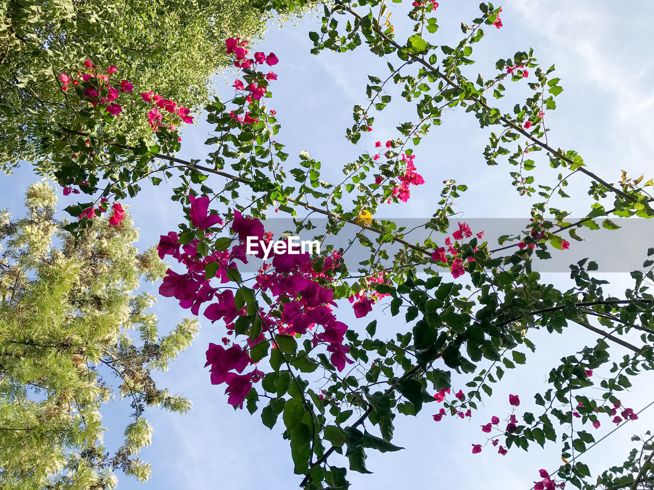 growth, flower, beauty in nature, nature, tree, low angle view, branch, fragility, blossom, sky, no people, day, petal, freshness, plant, outdoors, blooming