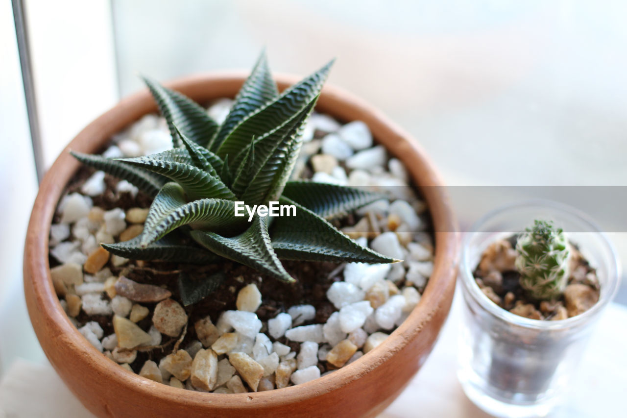 High Angle View Of Houseplant On Window Sill At Home