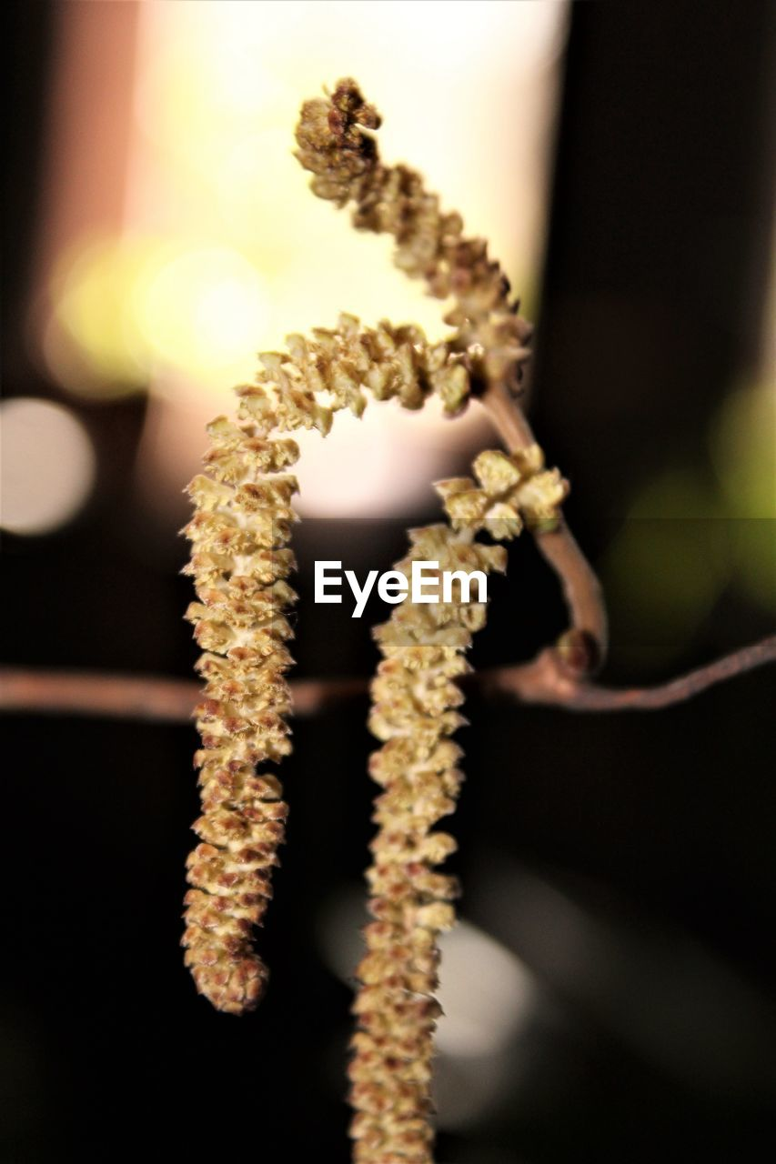 growth, no people, focus on foreground, close-up, nature, beauty in nature, catkin, fragility, outdoors, day, flower, freshness