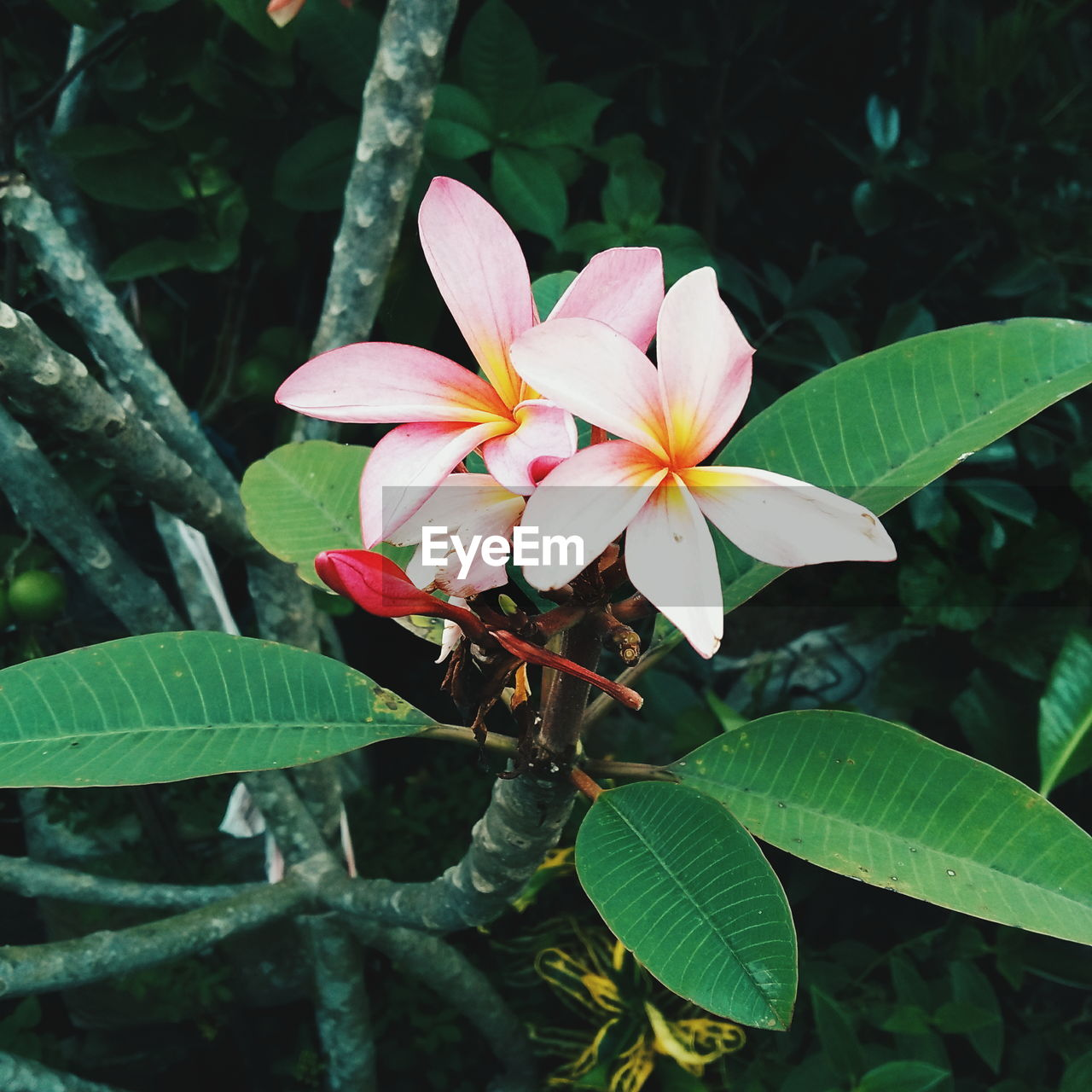 flower, leaf, nature, growth, petal, beauty in nature, fragility, freshness, flower head, plant, day, outdoors, green color, blooming, no people, close-up, animal themes, periwinkle