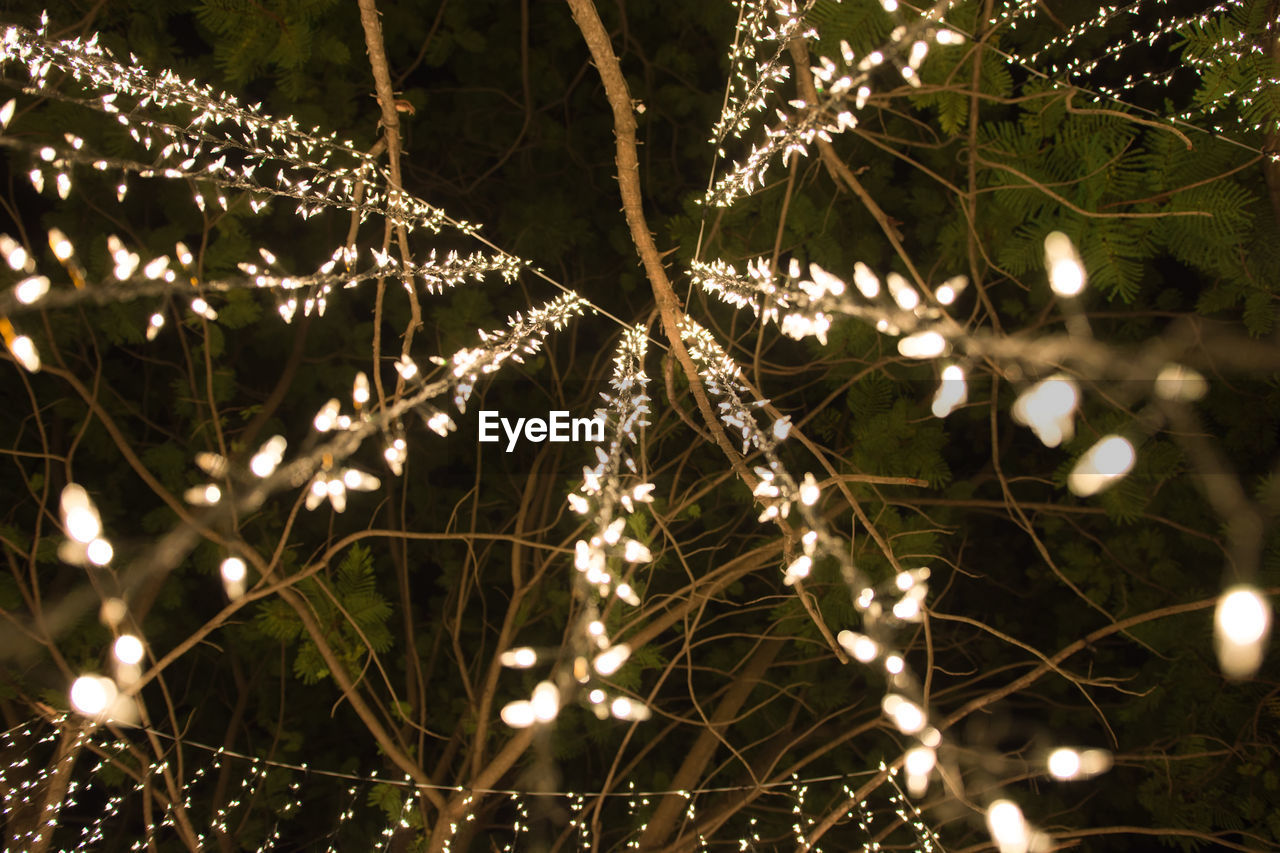 plant, illuminated, no people, growth, beauty in nature, nature, close-up, night, selective focus, focus on foreground, fragility, lighting equipment, outdoors, vulnerability, tree, tranquility, decoration, glowing, christmas lights, branch, light