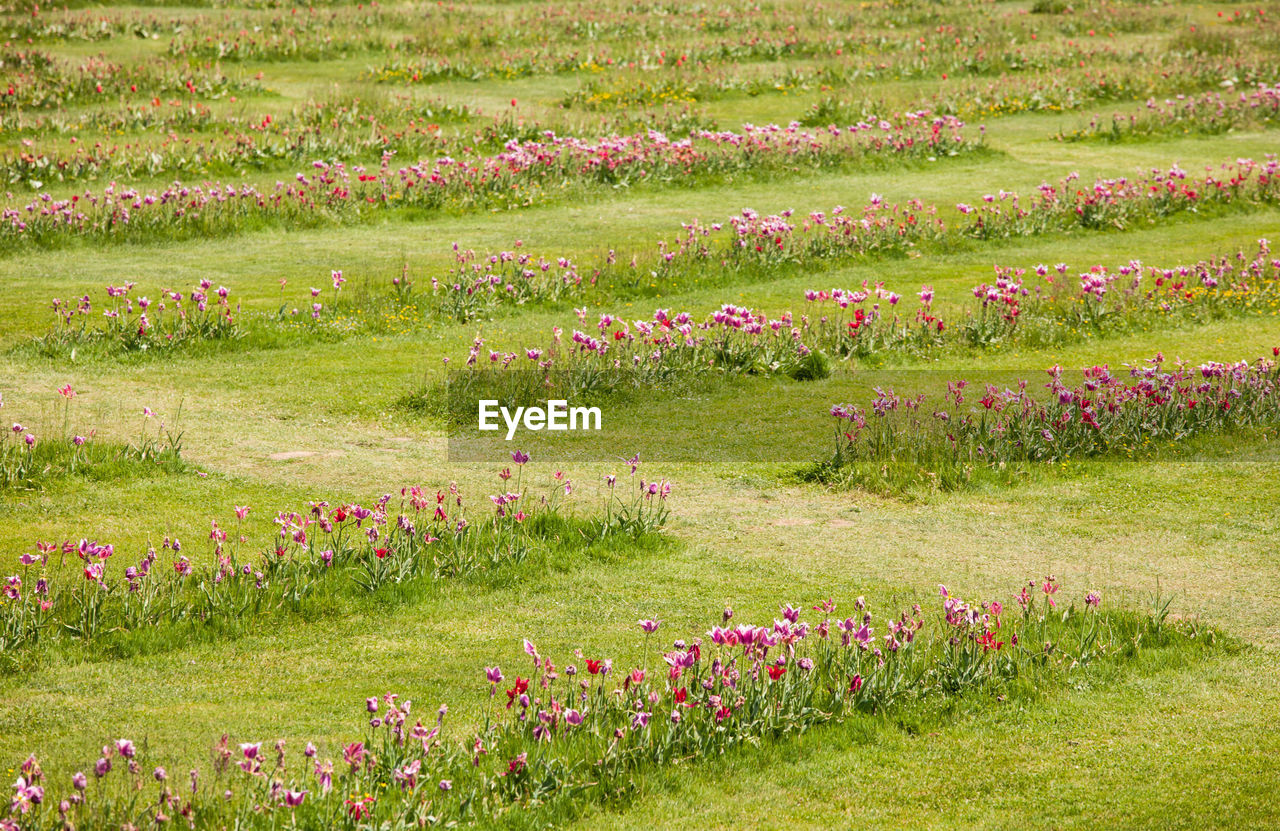 flower, grass, pink color, meadow, nature, green color, wildflower, field, front or back yard, no people, outdoors, flowerbed, springtime, plant, flower head, landscape, multi colored, beauty in nature, scenics, poppy, day, rural scene, closing, freshness, sky, close-up