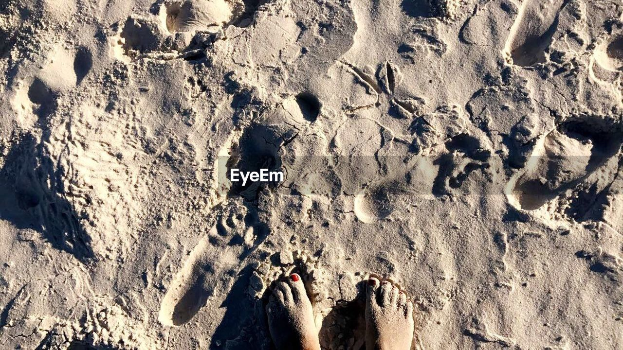 sand, high angle view, day, outdoors, nature, sunlight, beach, arid climate, paw print, footprint, mud, no people, shadow, track - imprint, mammal