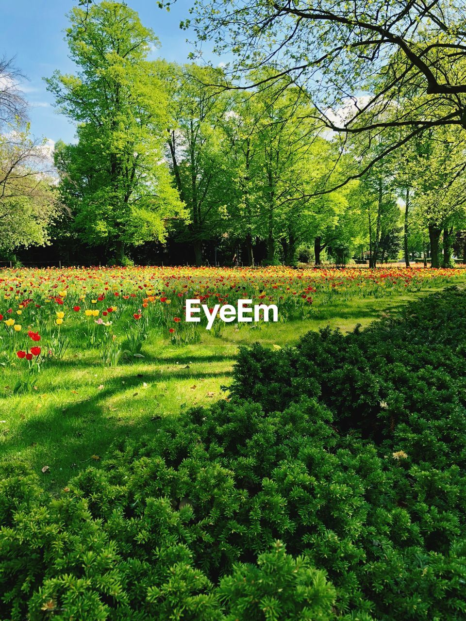 plant, tree, growth, beauty in nature, tranquility, tranquil scene, green color, landscape, grass, flower, nature, environment, day, flowering plant, park, scenics - nature, land, field, no people, park - man made space, outdoors, springtime, flowerbed