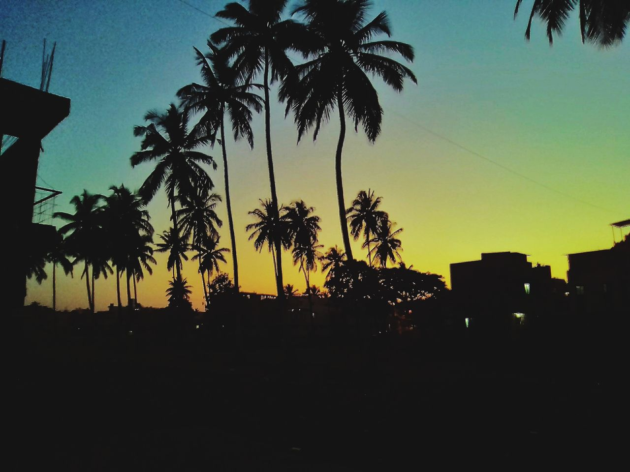 palm tree, silhouette, sunset, tree, growth, nature, clear sky, no people, sky, beauty in nature, outdoors