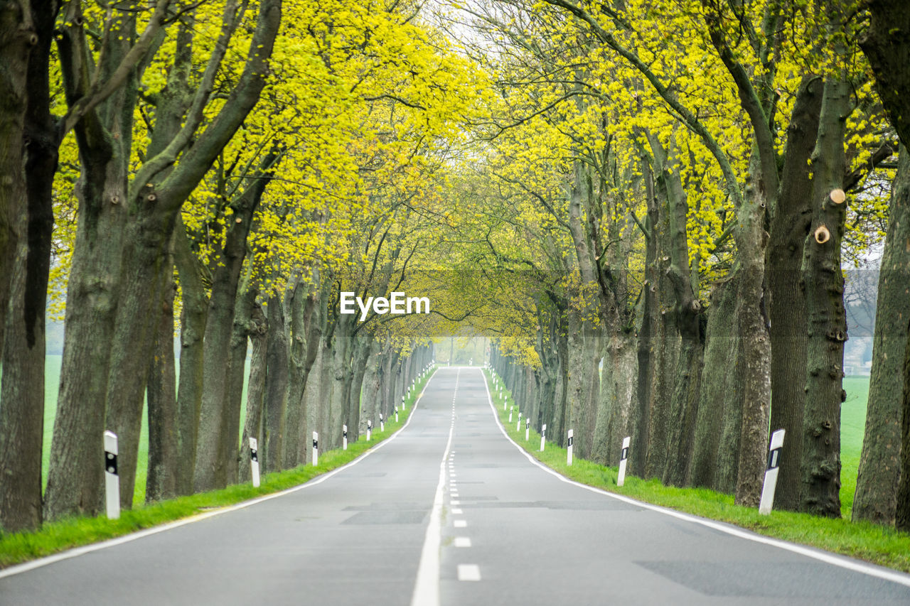 tree, direction, the way forward, road, plant, diminishing perspective, transportation, road marking, marking, symbol, nature, day, no people, tree trunk, sign, treelined, trunk, outdoors, vanishing point, dividing line