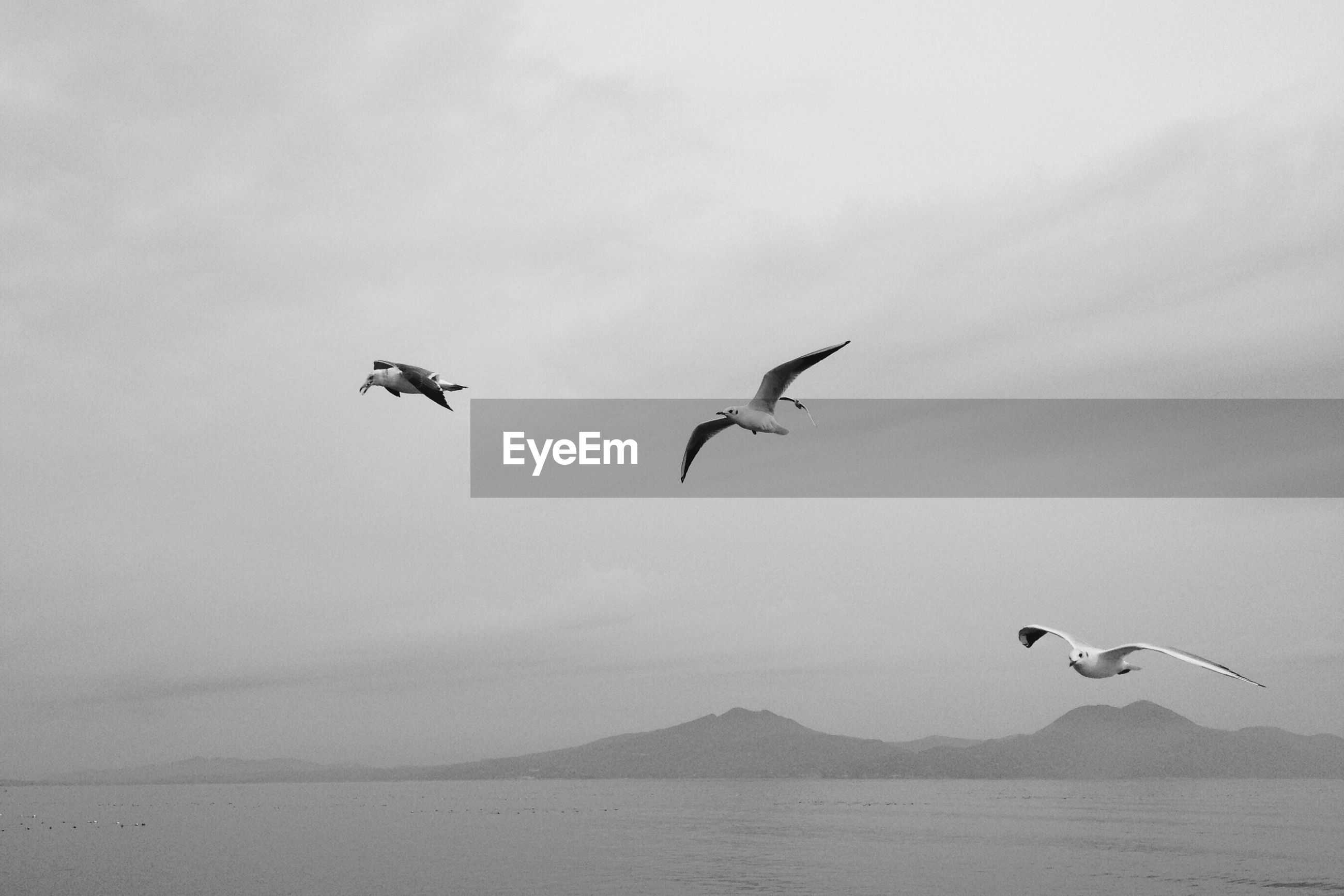 LOW ANGLE VIEW OF BIRDS FLYING OVER WATER AGAINST SKY