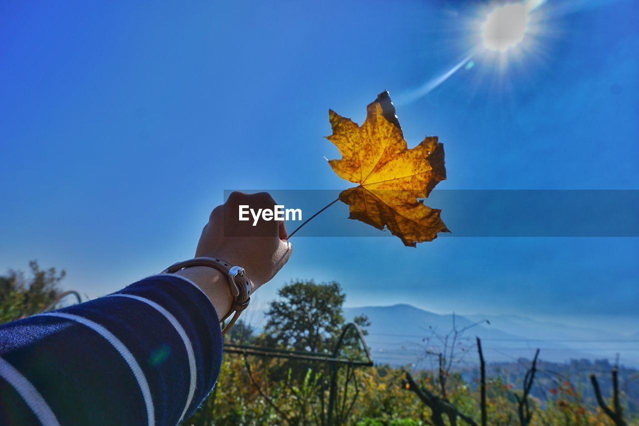 sky, leaf, plant part, autumn, nature, change, human hand, one person, hand, human body part, plant, day, holding, blue, sunlight, real people, outdoors, personal perspective, tree, focus on foreground, maple leaf, body part, lens flare, finger, leaves