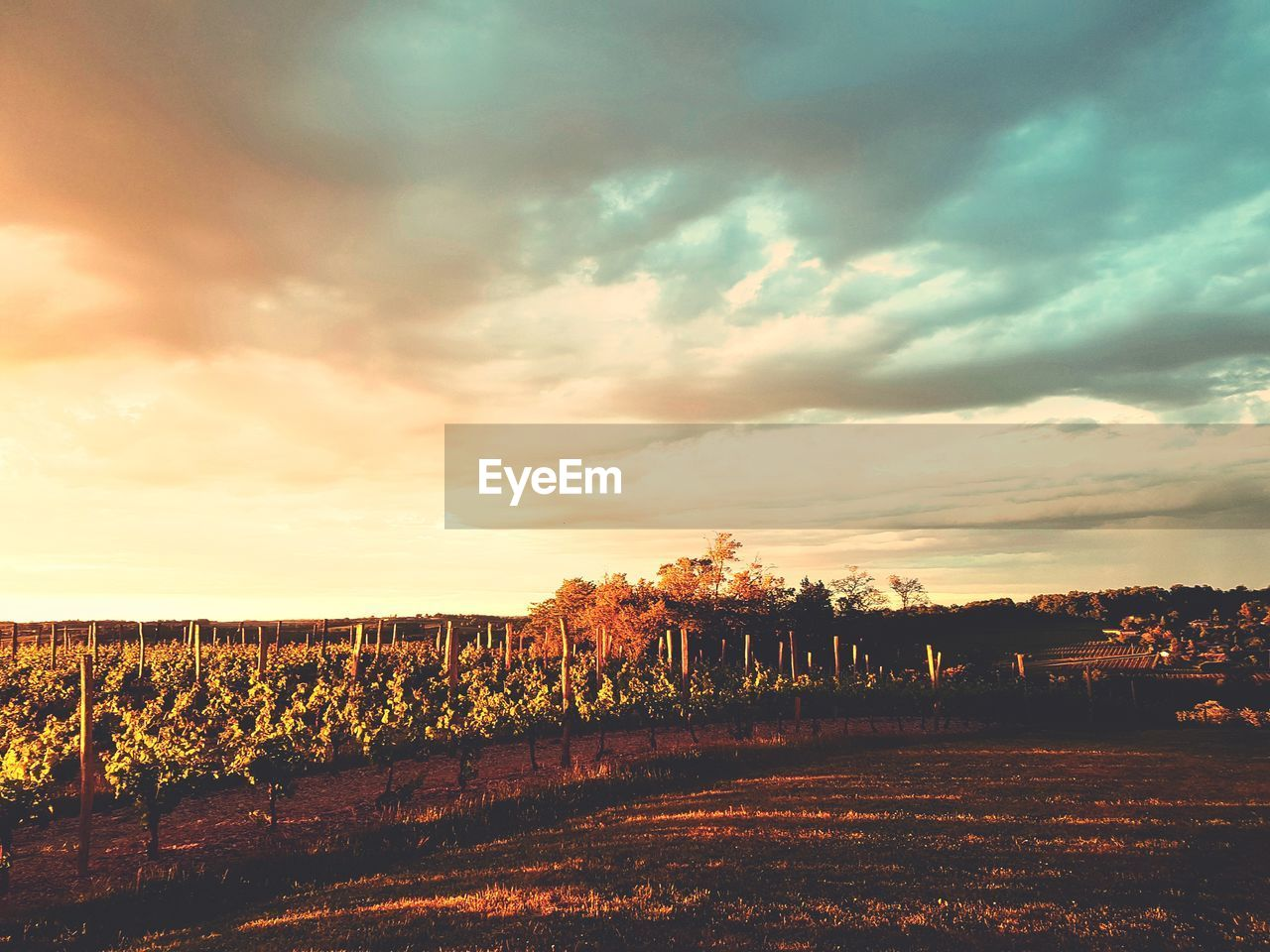 tranquil scene, sky, tranquility, scenics, beauty in nature, no people, agriculture, field, nature, landscape, cloud - sky, outdoors, sunset, day, tree