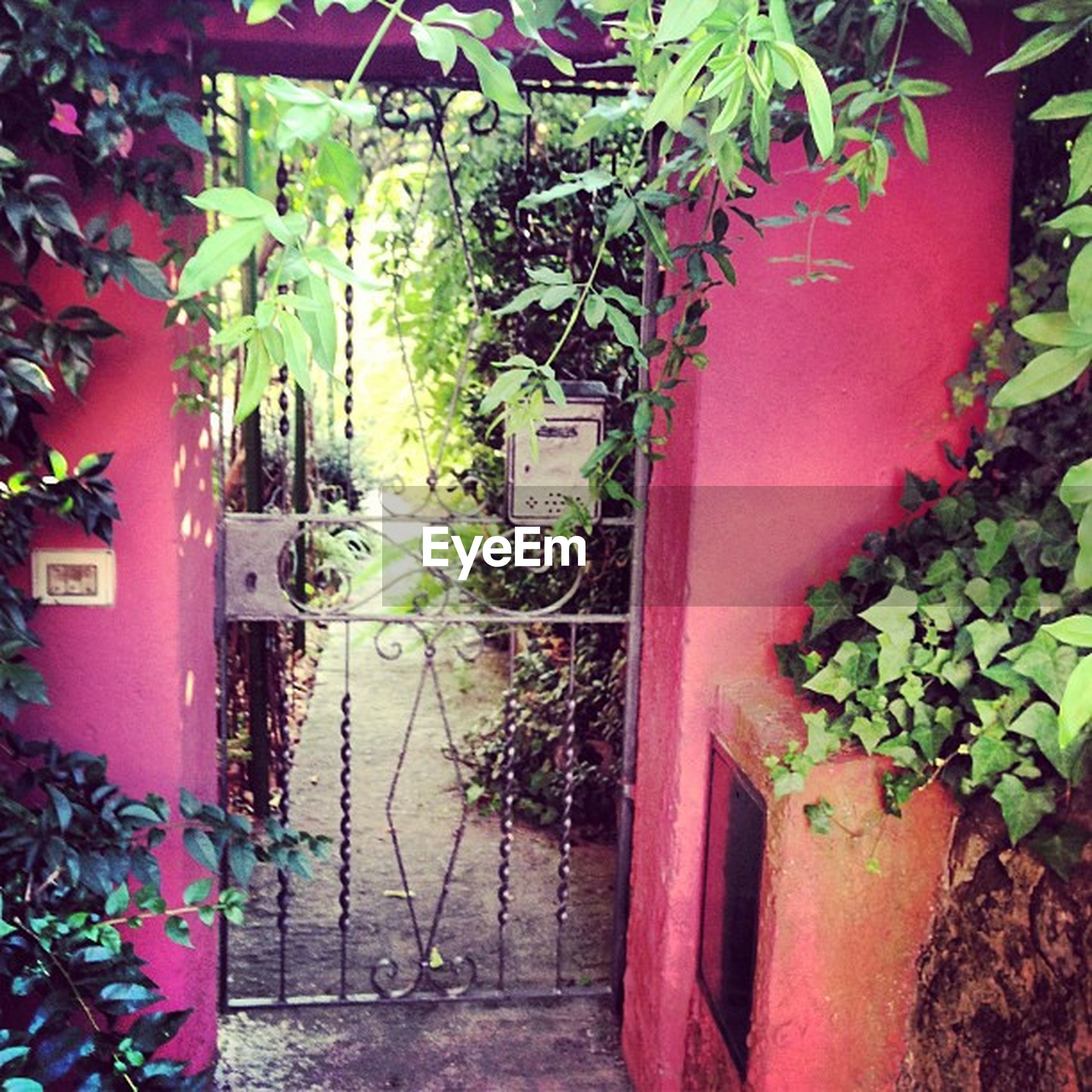 plant, architecture, built structure, building exterior, potted plant, growth, house, green color, wall - building feature, ivy, wall, leaf, residential structure, residential building, door, closed, outdoors, growing, no people, day