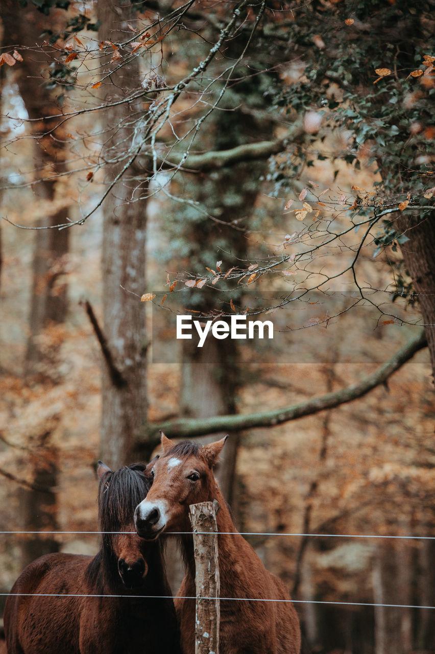 Horses against tree on field