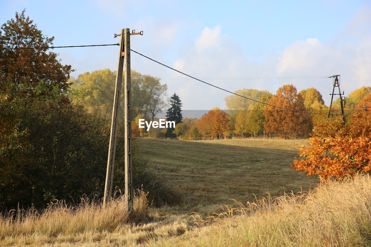 plant, tree, land, sky, beauty in nature, grass, field, landscape, tranquility, growth, tranquil scene, nature, day, scenics - nature, no people, environment, cable, non-urban scene, outdoors, cloud - sky, change, power supply