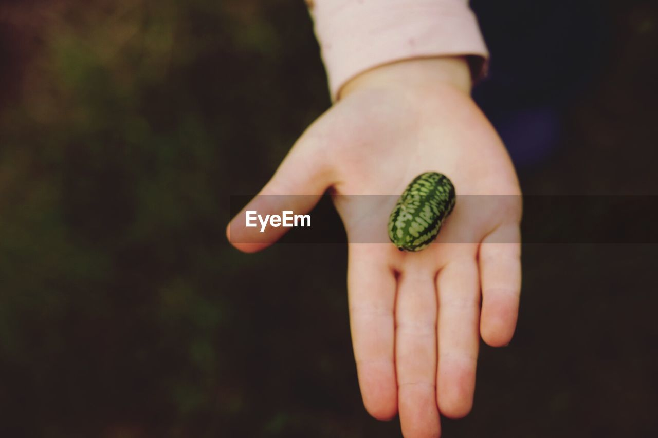 human hand, hand, human body part, one person, holding, focus on foreground, real people, healthy eating, body part, human finger, day, finger, food, close-up, food and drink, lifestyles, unrecognizable person, freshness, fruit, outdoors, human limb, care