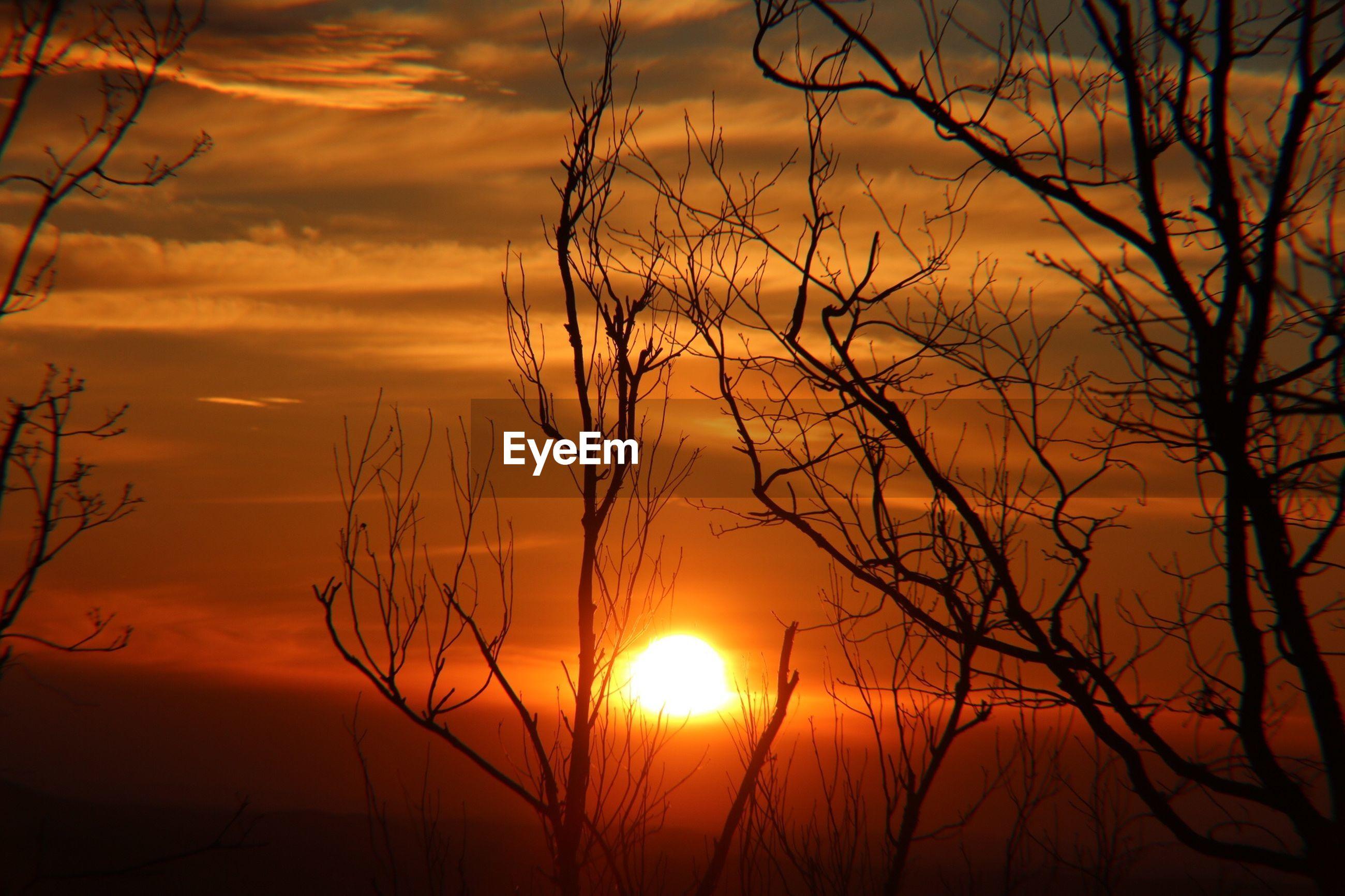 SILHOUETTE BARE TREE AGAINST ORANGE SKY DURING SUNSET